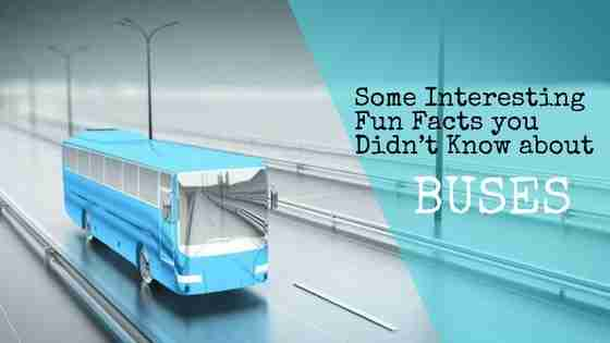 Some-Interesting-Fun-Facts-you-Didn't-Know-about-buses
